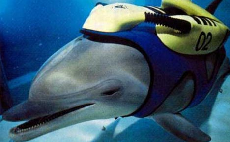 Are Dolphins Smarter Than You? | Planet Pailly
